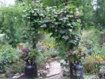 garden now moist!