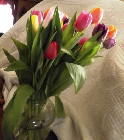 tulip-light 001