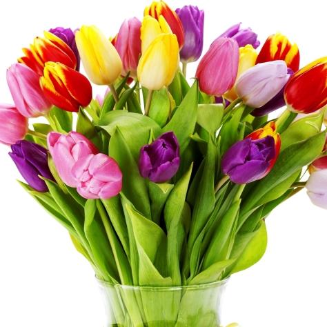 tulips_flowers_bouquet_bright_vase_white_background_37331_2048x2048