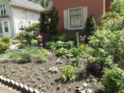 garden 5-25-13 006