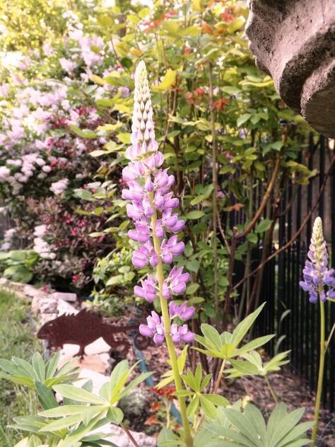 garden 5-30-13 016