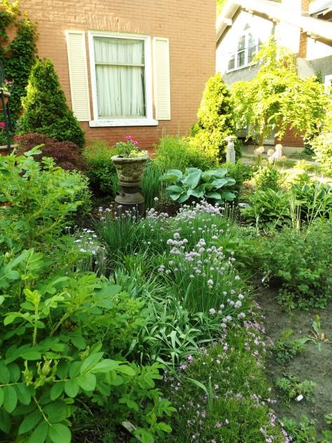 garden 5-30-13 022