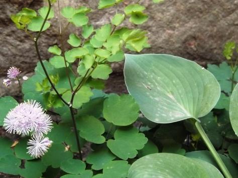 garden 5-30-13 028