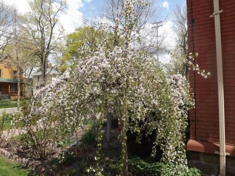 garden update 5-4-13 011