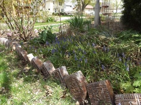 garden update 5-4-13 013
