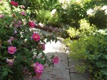apothecary's rose and Lady's Mantle making the walk narrow
