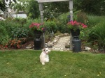 Garden inspection