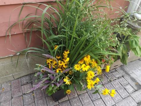 garden 7-11-13 001