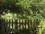garden 7-11-13 002