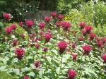 garden 7-11-13 004