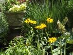 garden 7-11-13 011