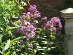 garden 7-11-13 014