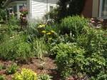 garden 7-11-13 015