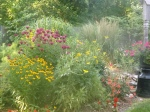 back yard perennials