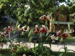 scheherazade lily