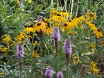 Liatris and rudbeckia