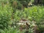 garden 7-4-13 013