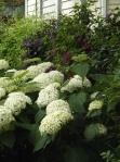garden 7-4-13 015