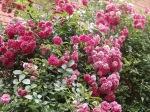 garden 7-4-13 021