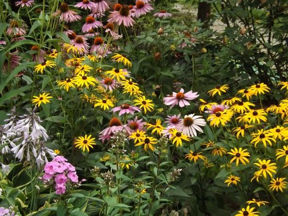 garden update 8-2-13 007