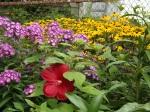 garden update 8-2-13 009