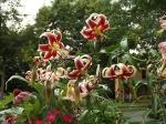 garden update 8-2-13 011
