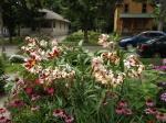 garden update 8-2-13 012