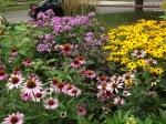 garden update 8-2-13 013