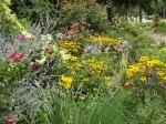 garden update 8-2-13 014