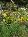 garden update 8-2-13 015