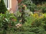 garden update 8-2-13 017