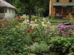 garden update 8-2-13 023