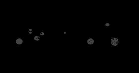 Paramecium_Anatomy.svg