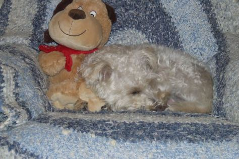 2009_1112teddy-and-friend-090002