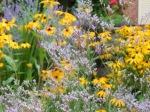 Limonium latifolium Sea lavender
