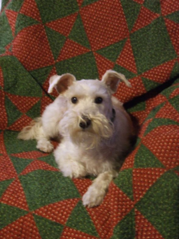 quilt-for-the-dog